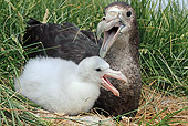 BRD 04 WF0034 01
