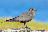 BRD 04 WF0039 01