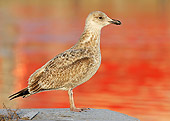 BRD 04 WF0040 01