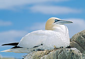 BRD 04 WF0046 01