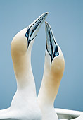 BRD 04 WF0047 01
