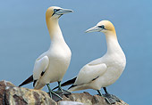 BRD 04 WF0048 01