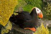 BRD 04 NE0005 01