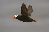 BRD 04 NE0009 01