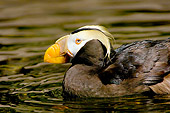 BRD 04 TL0002 01