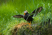 BRD 04 TL0003 01