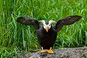 BRD 04 TL0004 01