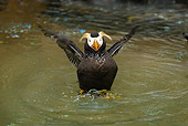 BRD 04 TL0005 01