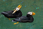 BRD 04 TL0007 01