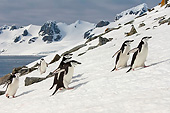 BRD 05 AC0009 01