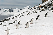 BRD 05 AC0010 01
