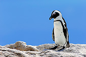 BRD 05 AC0024 01