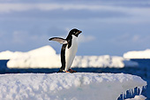 BRD 05 AC0026 01