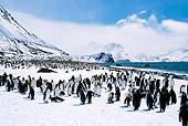 BRD 05 BA0001 01