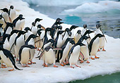 BRD 05 GL0003 01