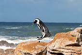 BRD 05 GL0006 01