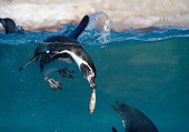 BRD 05 GL0008 01