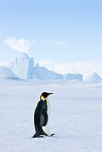 BRD 05 KH0015 01
