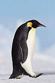 BRD 05 KH0020 01