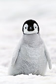 BRD 05 KH0023 01