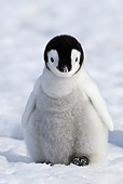 BRD 05 KH0024 01