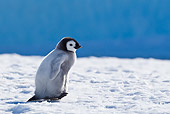 BRD 05 KH0028 01