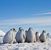 BRD 05 KH0031 01