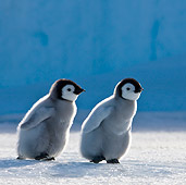 BRD 05 KH0032 01