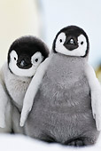 BRD 05 KH0033 01
