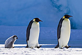 BRD 05 KH0042 01