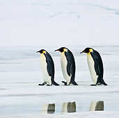 BRD 05 KH0047 01