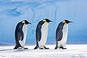 BRD 05 KH0049 01