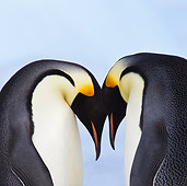 BRD 05 KH0058 01