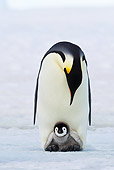BRD 05 KH0075 01