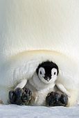 BRD 05 KH0077 01