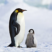 BRD 05 KH0079 01