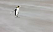 BRD 05 KH0110 01