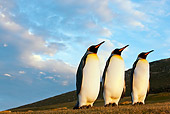 BRD 05 KH0117 01