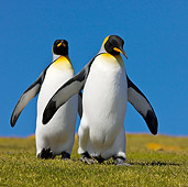 BRD 05 KH0118 01