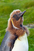 BRD 05 KH0119 01