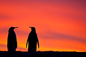 BRD 05 KH0120 01