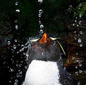 BRD 05 KH0126 01