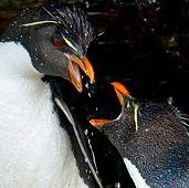 BRD 05 KH0134 01