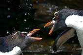 BRD 05 KH0135 01
