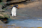 BRD 05 KH0141 01