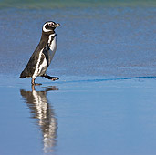 BRD 05 KH0151 01
