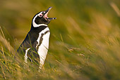BRD 05 KH0154 01