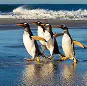 BRD 05 KH0156 01