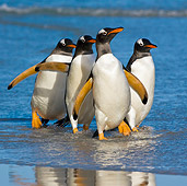 BRD 05 KH0157 01