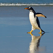 BRD 05 KH0158 01